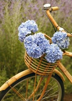 Beautiful hydrangea in a bike basket. So pastoral! Hortensia Hydrangea, Hydrangea Macrophylla, Blue Hydrangea, Old Bicycle, Bicycle Basket, Vintage Bicycles, My Flower, Decoration, Beautiful Flowers