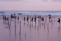 Fishermen at Koggala beach in Sri Lanka perched on sticks over the water. Ownership of these spots is passed on from one generation to the next.  @Hans Kemp