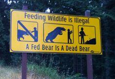 from my camera - please don't feed the bears.  #deadbear #sillyhumans