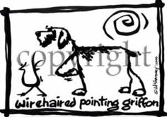 Wirehaired Pointing Griffon Cavern Canine