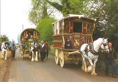 Big Sky Gypsy, Gypsy Horse, Gypsy Vanner, Gypsy Cob, Irish Cob, Gypsy Horse for sale, Homozygous Stallion, Montana