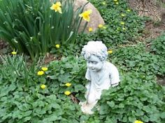 Buttercups and daffodils