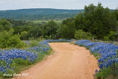 Bluebonnets - Texas Hill Country...this is home!: