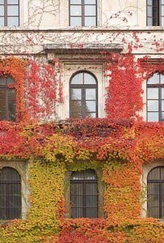 Fall vines~!