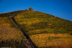 Langhe in Autumn
