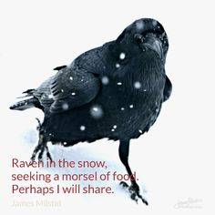 Daily Haiku - We did share a bit of our lunch with this raven. He flew off, but soon returned with his partner to share in our snowy picnic. I learned a lot about sharing that day.   #dailyhaiku #haiku #poetry #wisdom #raven #brycecanyon #jamesmilstidphotography #sharing