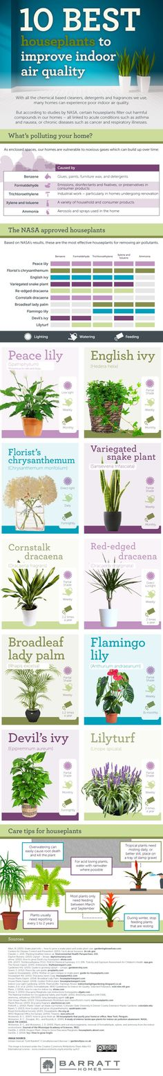 10-best-houseplants-to-improve-indoor-air-quality---V3_mini