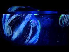 冬の京都水族館 その1~3Dプロジェクションマッピング - YouTube