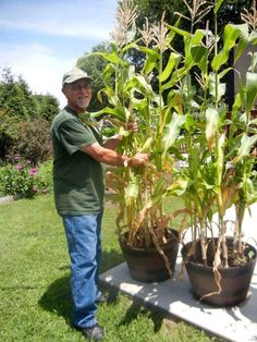 Fruit And Garden Review Container Corn