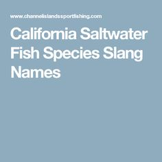 Home made frag rack salt water fish pinterest home for California saltwater fish species