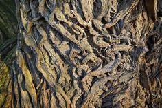 braids of a tree