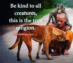 Dog Quotes, Animal Quotes, Wisdom Quotes, Life Quotes, Animals And Pets, Cute Animals, Strange Animals, Vegan Quotes, Vegan Memes