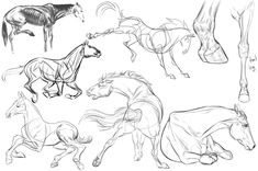 Pencil Drawing Tutorials Mystery Project-Batch 6 by ColossalBeltloop - Horse Drawings, Animal Drawings, Art Drawings, Pencil Drawings, Drawing Poses, Drawing Sketches, Painting & Drawing, Knife Painting, Horse Drawing Tutorial