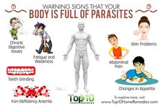 Just imagining a parasite in the body is a scary thing, but many people have parasites and are not even aware of it. Parasites are microorganisms that live off other organisms. Anyone can get a parasitic infestation. It is more common than you may think. Stomach Problems, Skin Problems, Enteric Nervous System, Weak Immune System, Top 10 Home Remedies, Abdominal Pain, Warning Signs, Health Matters, How To Stay Healthy