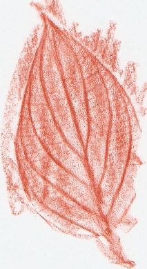 Leaf Rubbing - Exploration and coloring are DAP.
