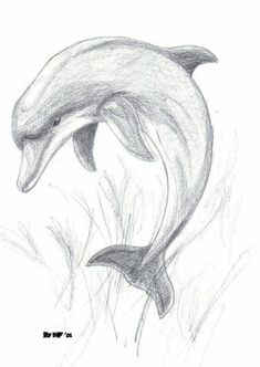 Animal Drawings Images For > Pencil Drawings Of Dolphins Art Drawings Sketches Simple, Pencil Art Drawings, Realistic Drawings, Easy Drawings, Animal Drawings, Pencil Sketches Of Animals, Drawing Ideas, Animal Sketches Easy, Pencil Drawing Tutorials