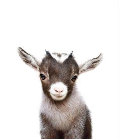 Baby Goat Print PRINTABLE ART Farm animal prints Nursery