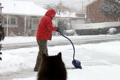 Cat Supervised