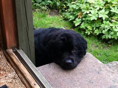 If you have a newfie.....you have seen this face! But, I don't want to come in!