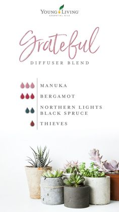 4 questions about Manuka essential oil you need answered ASAP Our Grateful diffuser blend features Manuka, Bergamot, Northern Lights Black Spruce, and Thieves essential oils for a scent that speaks of walks through citrus groves on warm summer days. Manuka Essential Oil, Manuka Oil, Essential Oil Diffuser Blends, Essential Oil Uses, Thieves Essential Oil, Young Living Diffuser, Young Living Oils, Young Living Essential Oils, Doterra