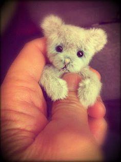 Tiny new bear - just born!