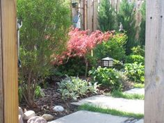 See this tiny yard's transformation into a no-mow oasis. #LandscapingSmallYard #NoMowYard