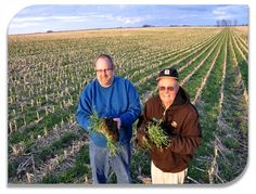 https://seedscolorado.wordpress.com/2015/04/25/the-benefits-of-planting-forage-on-land-with-low-fertility/ seeds colorado