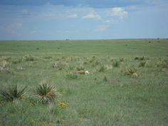 Wide open space of NM