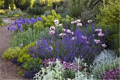 For inspiration try Beth Chatto's dry garden. www.bethchatto.co.uk