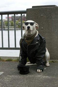 Vamos para correr moto jaja....animal lover yeiiiii!!!