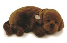 PERFECT PETZZZ PET, CHOC.LAB >>> Find out more about the great product at the image link.
