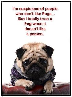 Suspicious of people that don't like pugs
