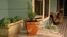 Upright Rosemary Variety