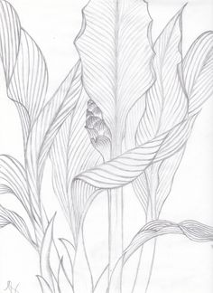 Visualization Basics Tropical Leaves  Contour Drawing from life