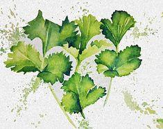 Gin Botanicals: Juniper Plant Watercolour Art Print Limited   Etsy Watercolor Plants, Watercolour Art, Juniper Plant, Dolphin Art, Gin, House Warming, Berries, Herbs