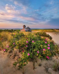 "@ignewengland on Instagram: ""IGNE Feature 💥📷💥 .  Photographer: @bettywileyphoto  State: Massachusetts  Featured tag: #ignewengland  Mod: @davekid  Team:…"" Cape Cod Beaches, Creative Pictures, Massachusetts, Kicks, Country Roads, Sunset, Places, Beautiful, Instagram"