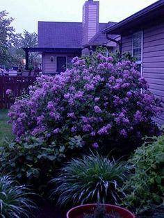 La La Lavender and Purple...WOW!