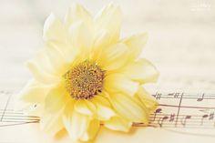 Floral Song | Canción Floral #flowers #flores