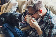 Free stock photo of animal, cat, coffee