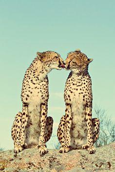 kisses // #safari