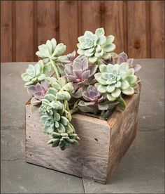Succulents in a vintage wooden box