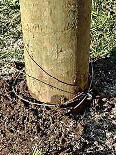 37 Best Deer Fence Images Deer Fence Fence Deer