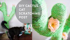 DIY Catcus Scratching Post