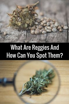 What Are Reggies (super low quality weed) And How Can You Spot Them?