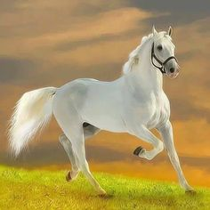 Cavalo branco lindaõ