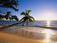 La Plage  des Salines , Martinique   le rêve !!!!!!