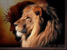 Lion of the Tribe of Judah Rev 5:5
