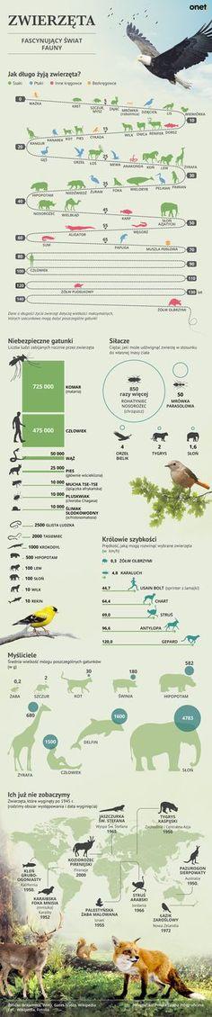 Learn Polish, Polish Language, Montessori Elementary, Animal Habitats, Girls World, Animals For Kids, Kids Learning, Poland, Back To School
