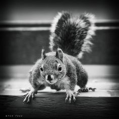 Nuts! More Nuts!