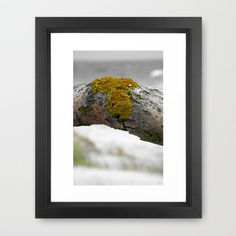 flotsam and jetsam no.3 Framed Art Print by Pia Schneider [atelier COLOUR-VISION] - $34.00. Conceptual Photography Topic: Flotsam and Jetsam Photography: 2009 Digital Editing: 2013/2014 © by atelier COLOUR-VISION | Pia Schneider Series: https://www.facebook.com/media/set/?s...308&type=3  #nature #photography #wood #tree #barck #artprint #society6 #flotsam #jetsam #strandgut #sylt #hörnum #nordsee #piaschneider